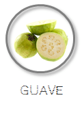 Kokoswasser Geschmack Sorte Guave